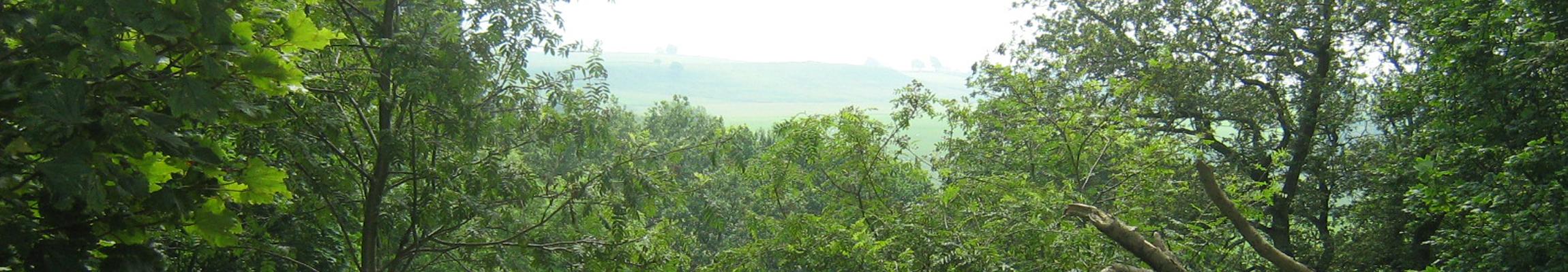 Bantam Wood