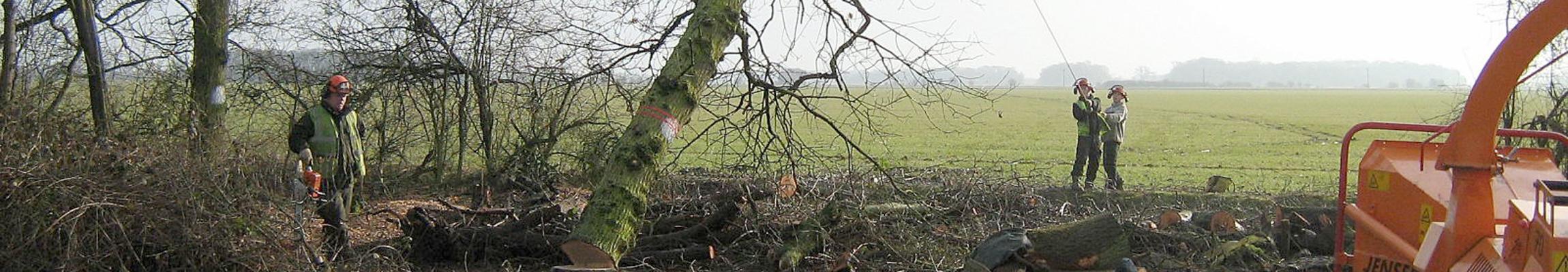 Tree Felling1