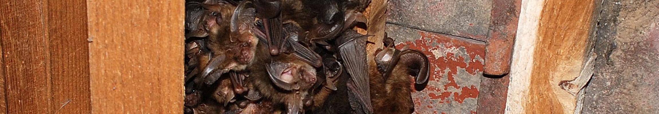 bat-group