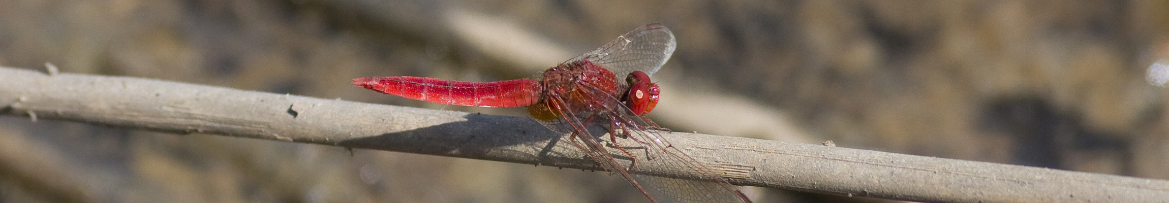 dragonfly spain1 (137)